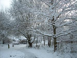 Snowy Path. Thanks to Ann Clarke for this beautiful picture