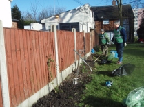 Creating a border of shrubs & perennials by the fence on corner of Woodcock Lane