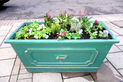Winter colour in re-positioned planter
