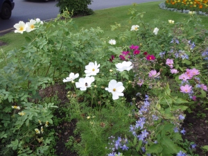 Blooming Flowers encouraging bees, planted in Acocks Green 2012