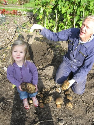Allotment Gardener Steve digging up potatoes with his grandaughter