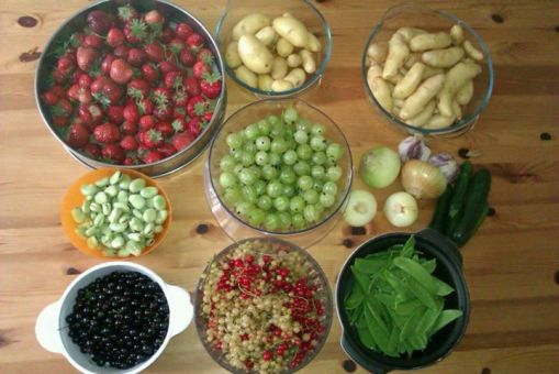 One day's pickings in July