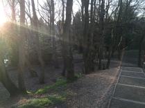 Westley Vale Steps
