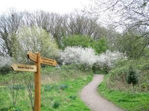 Westley Vale in Springtime
