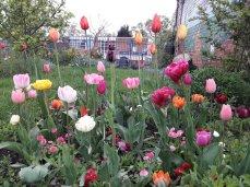 A delightful array in the orchard, Mallard Close