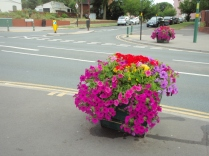The planters continue to flourish with the team getting up early to water during the hot summer.
